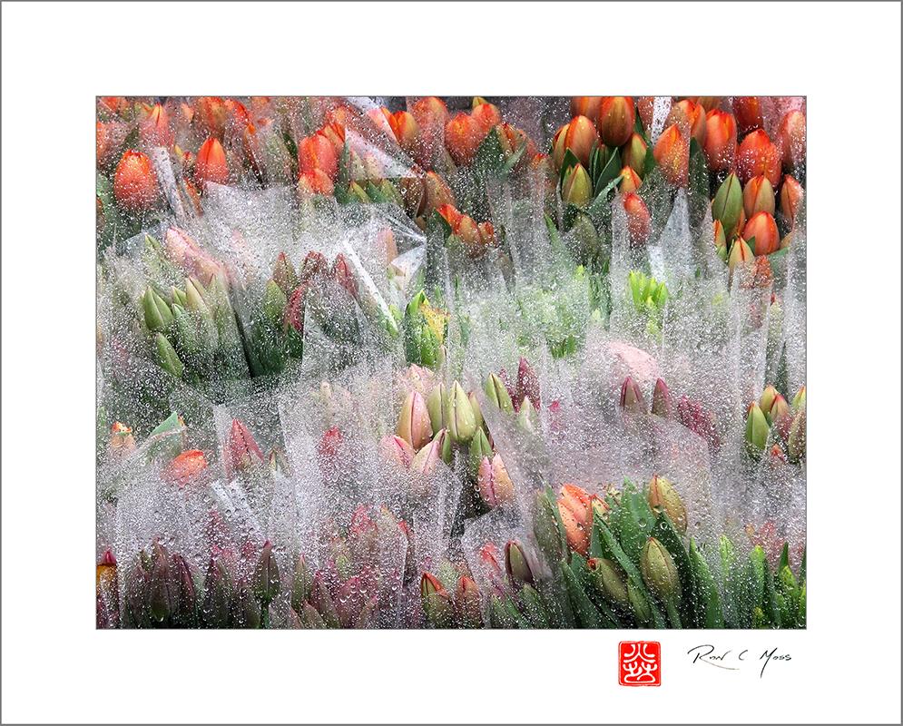 Spring AHS Haiga Kukai:Seasonal