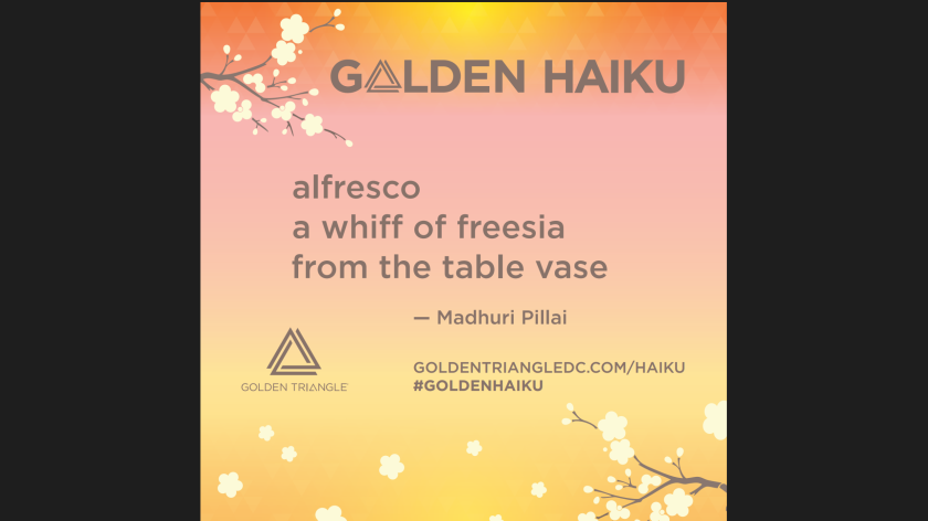 Golden Haiku Madhuri Pillai