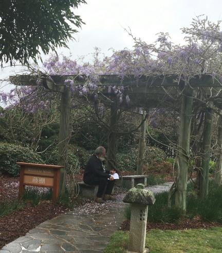 kent under wisteria spring 2018