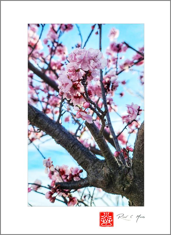 AHS Spring Haiga Kukai 2021Seasonal